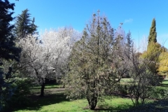 Parque de los Jesuitas en primavera.