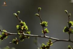 hojas brotes