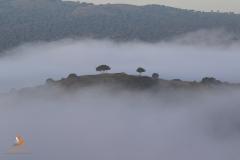 Dehesa en un día de niebla