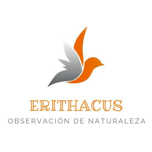 Erithacus-Observación de naturaleza