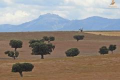 Dehesa con la Sierra de Francia al fondo (Salamanca)
