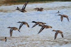 Aves acuáticas / Aquatic birds