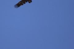 Aves rapaces/ Birds of prey
