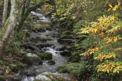 Río de montaña/Mountain´s river