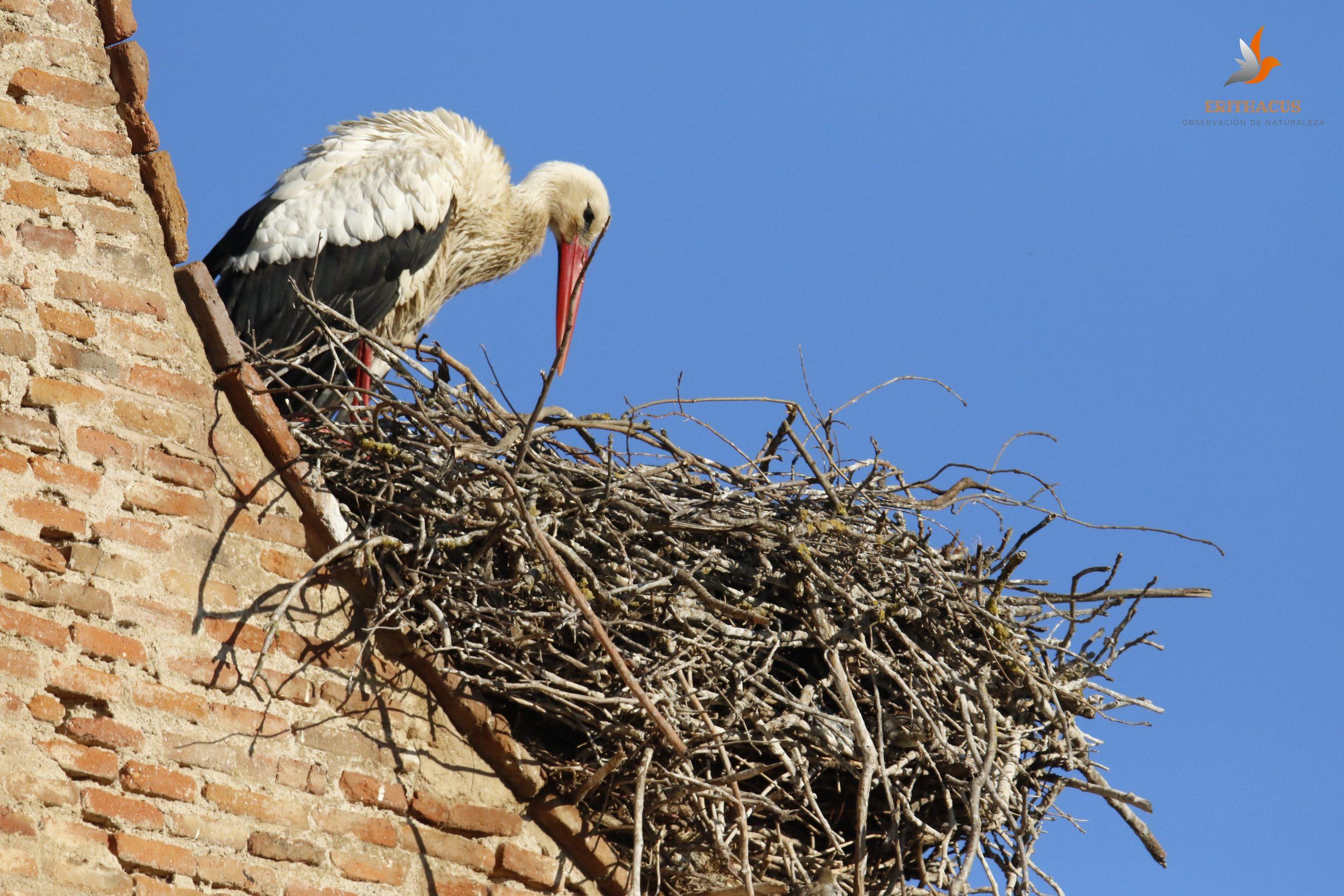 Aves urbanas